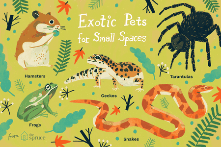 Exotic Pets for Small Spaces