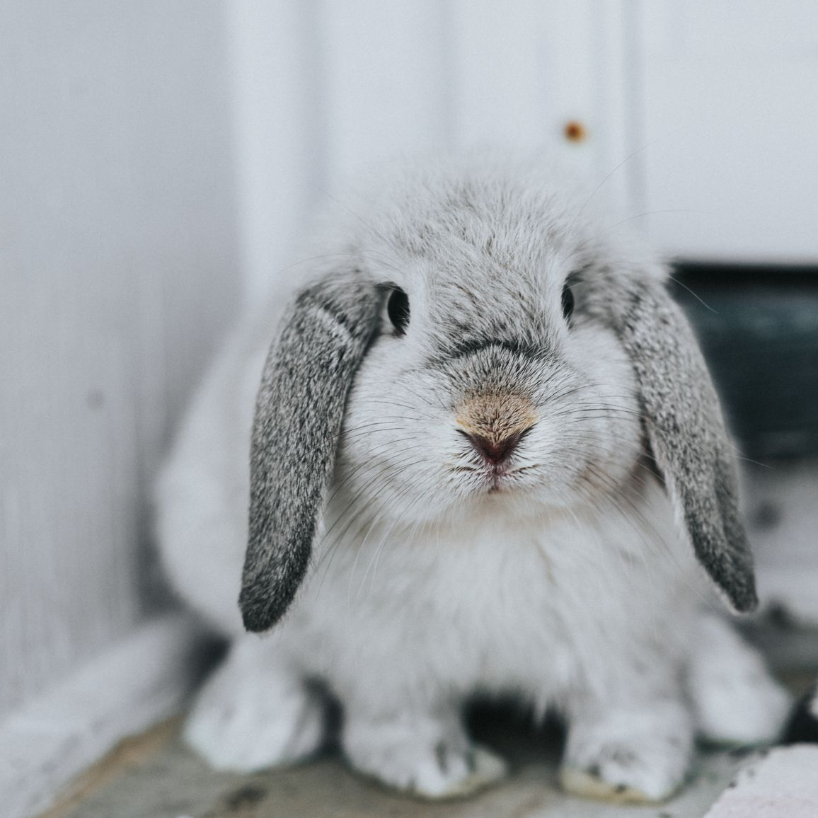 What To Do If Your Rabbit Is Sick
