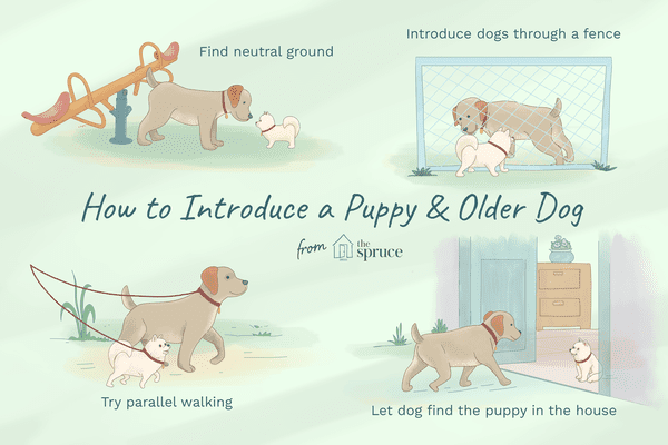 how to introduce a puppy and older dog