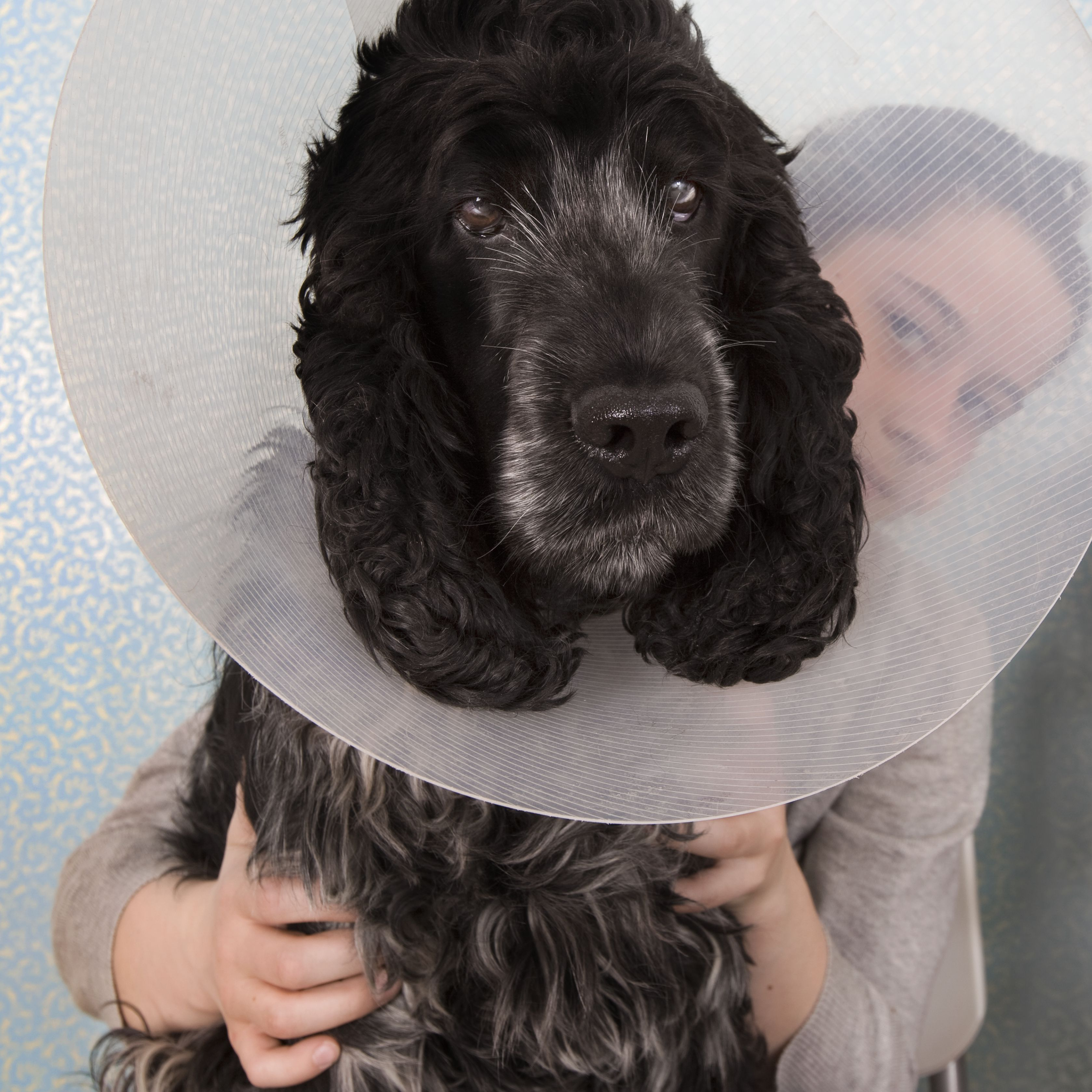 A dog with a medical collar