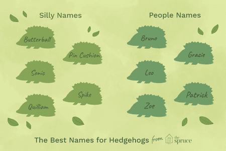 illustration depicting names of hedgehogs - Christmas Pet Names