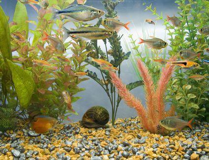 Aquarium full of colorful tropical fish.