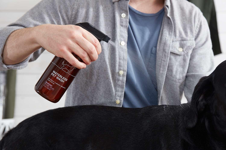 Hombre rociando Waterless Pet Wash en un perro negro