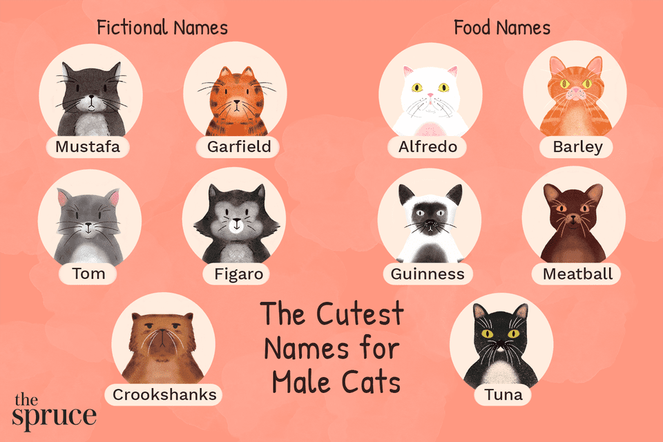 The Cutest Names for Male Cats