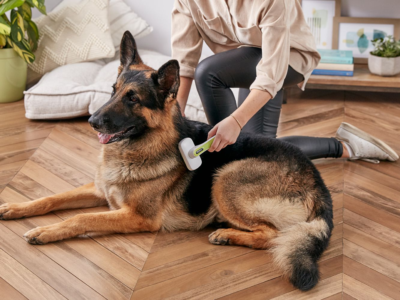 Why Dogs Shed and How to Deal With It