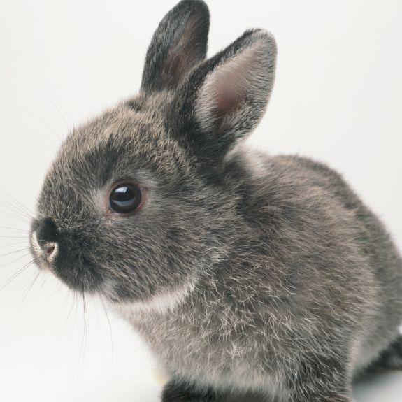 Pet Rabbit Care Guide