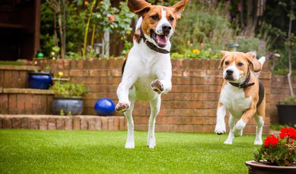 Dogs Playing Outdoors
