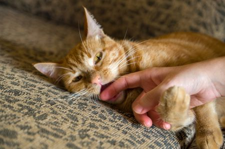 Reasons Why Cats Bite And How To Stop It