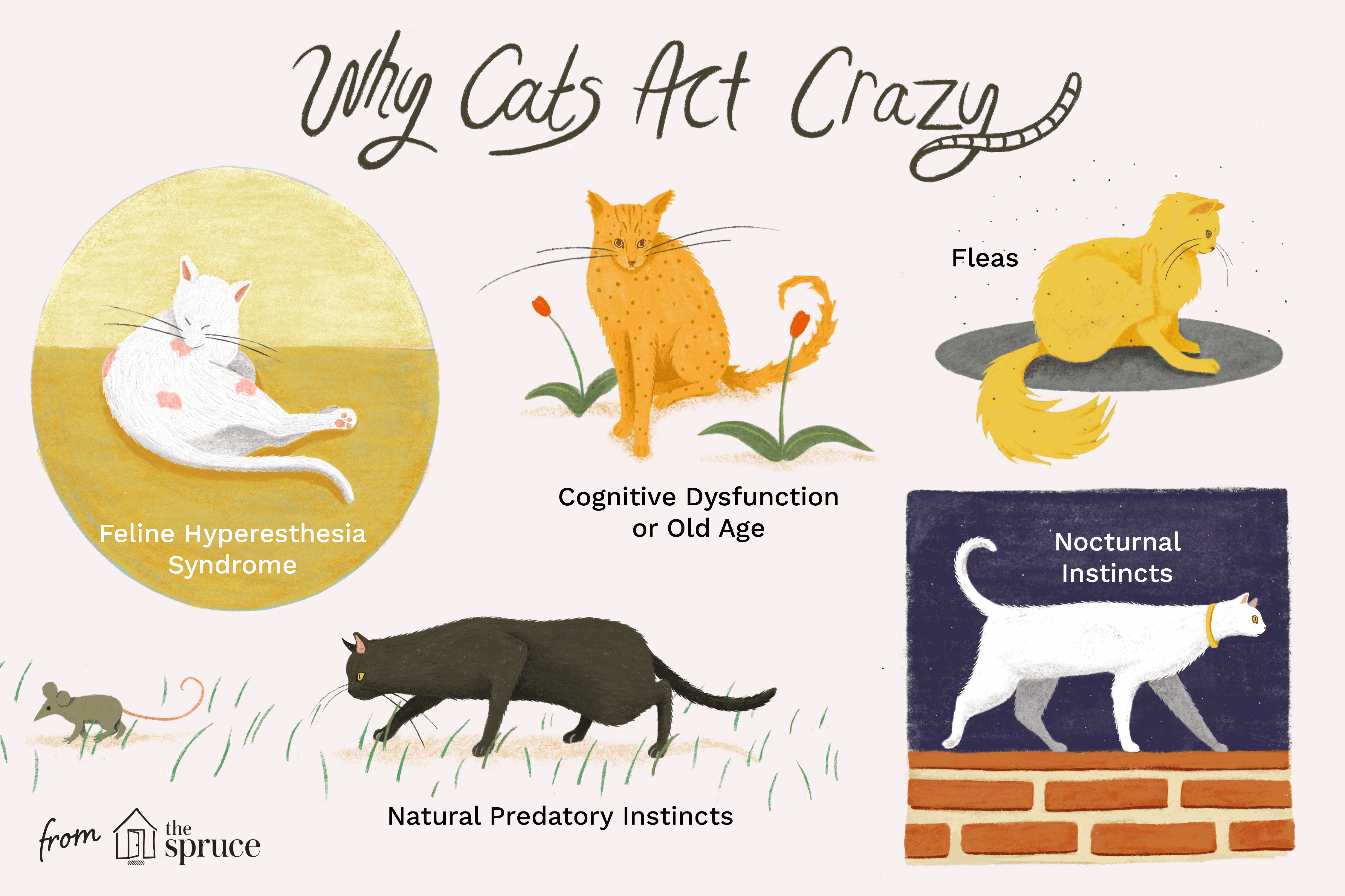 why cats act crazy illustration