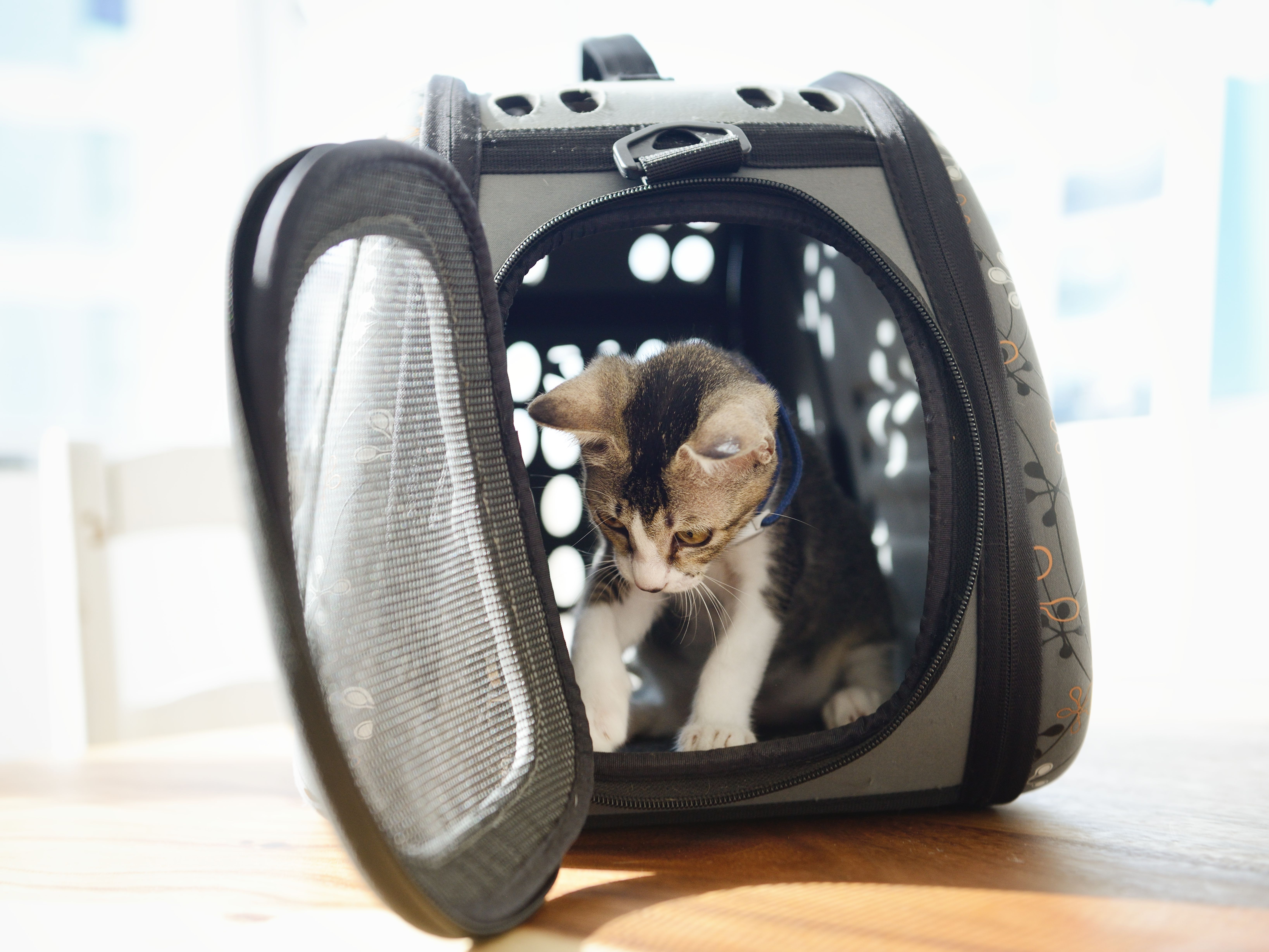 Amtrak Pet Carrier Comfort Travel Bag for Small Dogs Cats Puppies Kittens Pets
