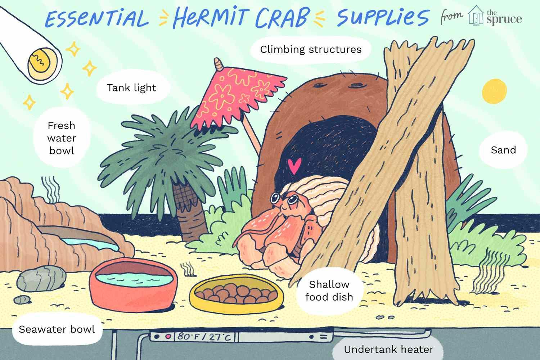cangrejo ermitaño esencial suministros ilustración