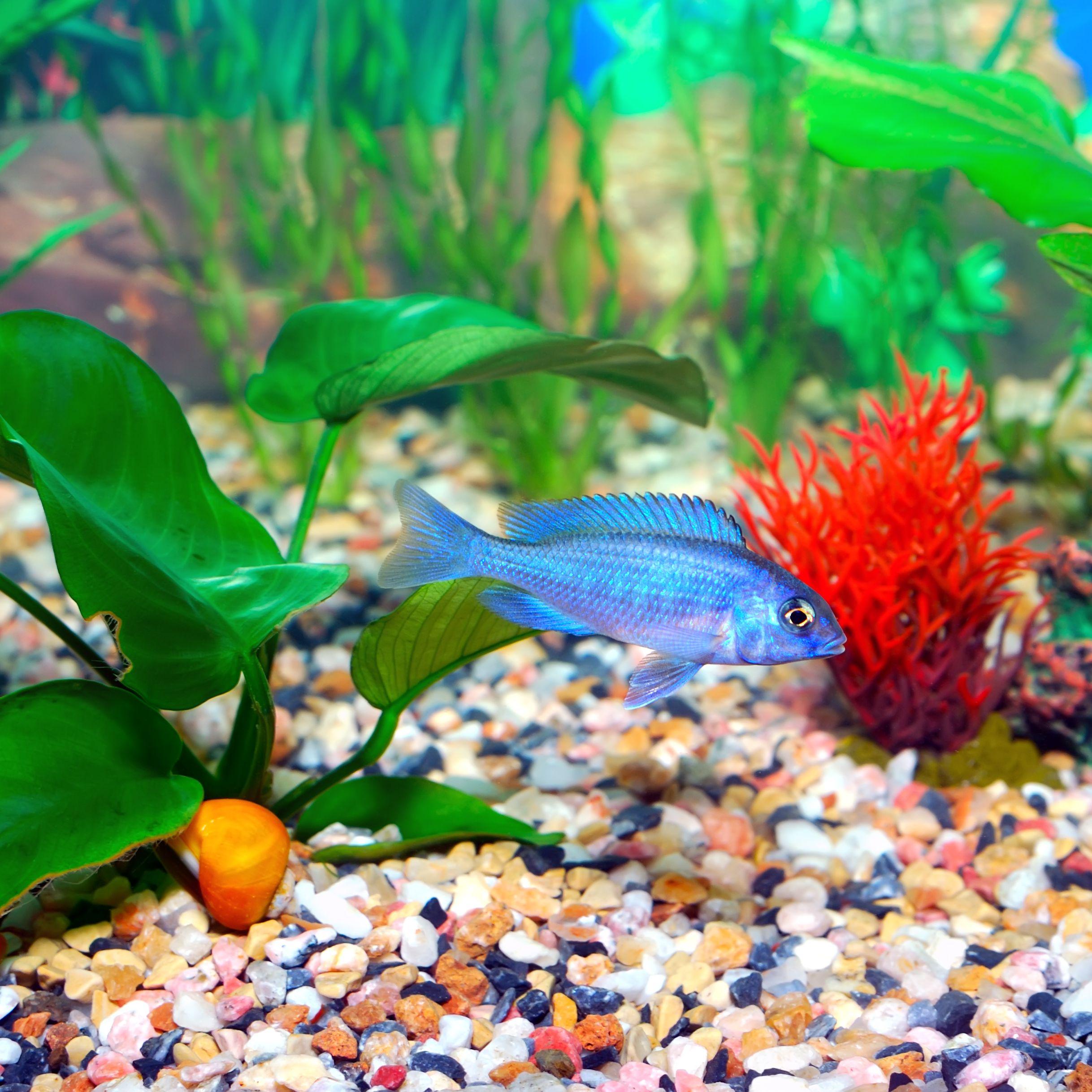 Tips For Aquarium Filter Media Packing Order