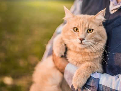 How to Treat Mental Retardation in Cats