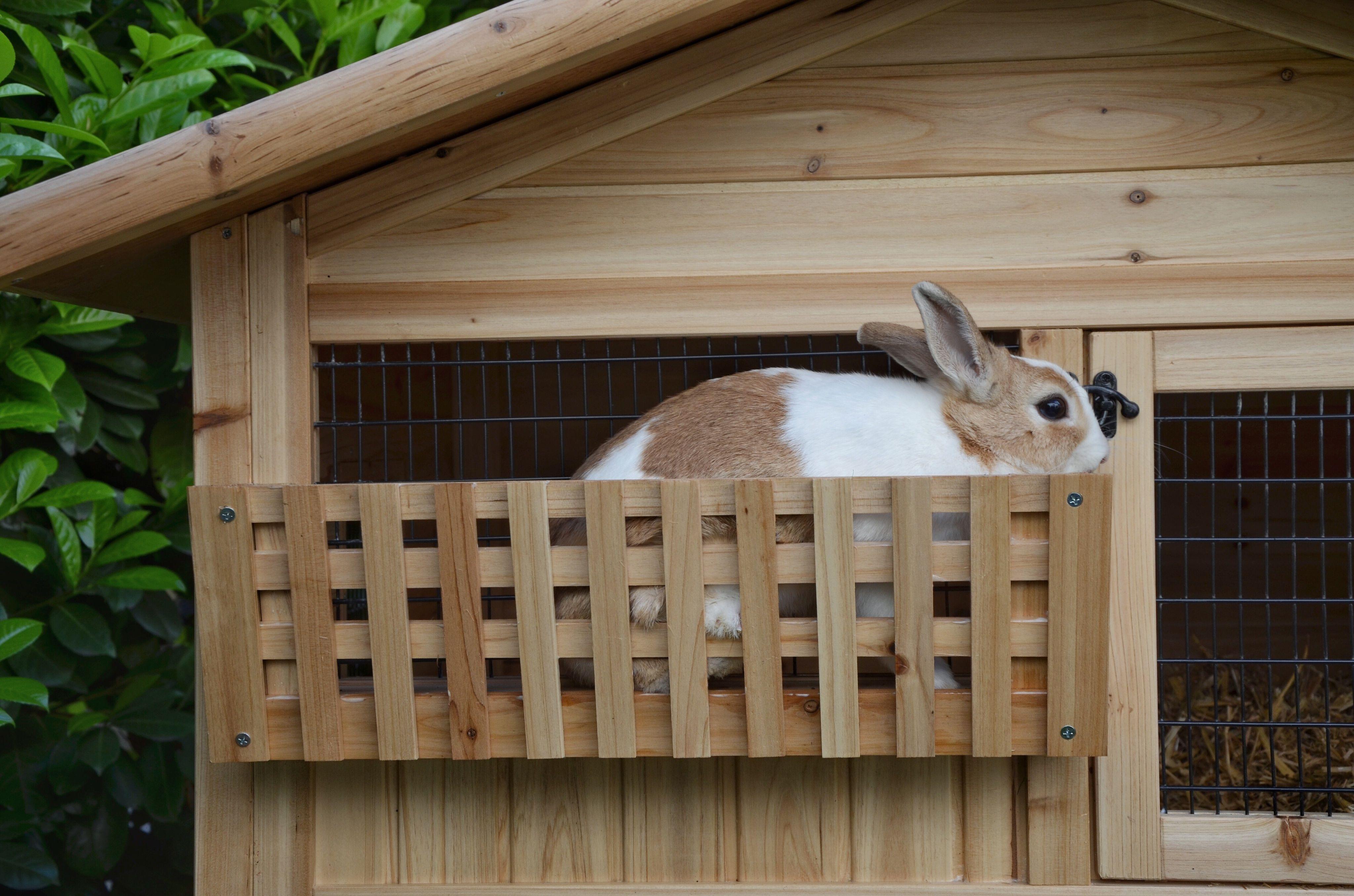 Rabbit in hutch