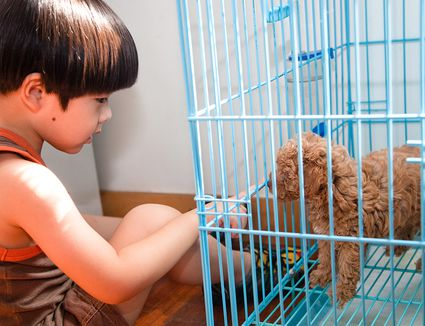 Puppy in blue kennel, boy playing with him.