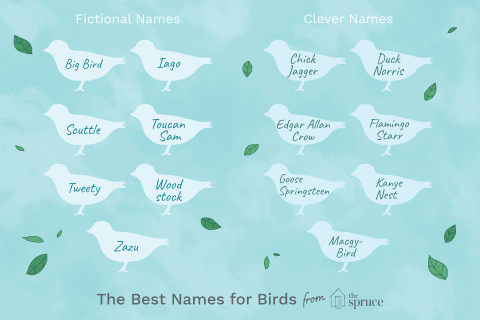 name ideas for birds