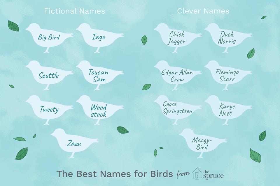 nombrar ideas para pájaros