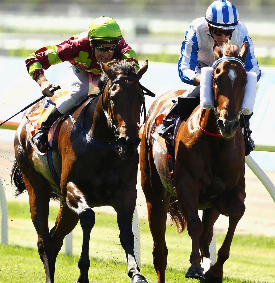dos carreras de caballos pura sangre