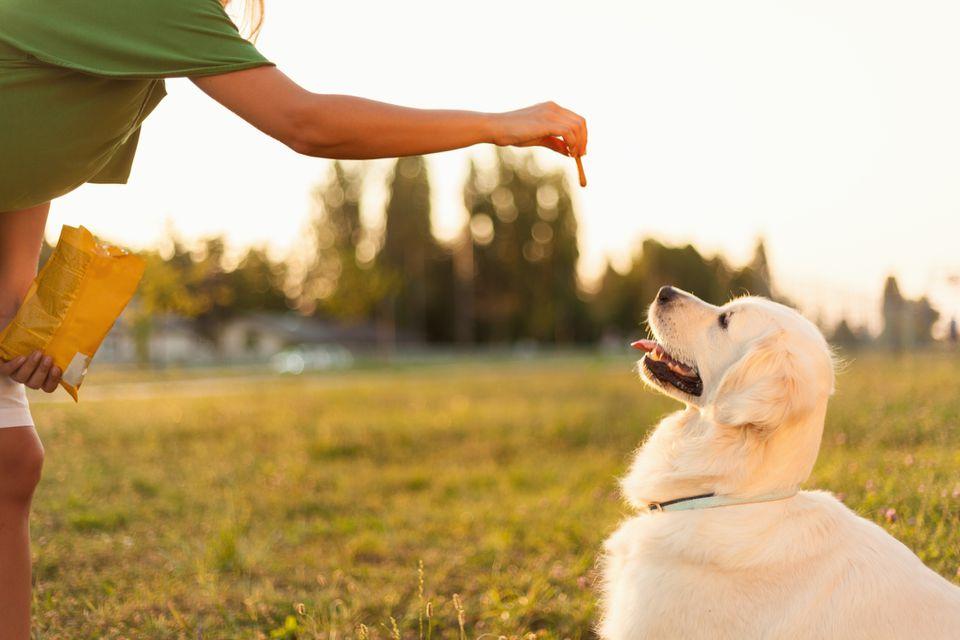 Man training his dog with treats
