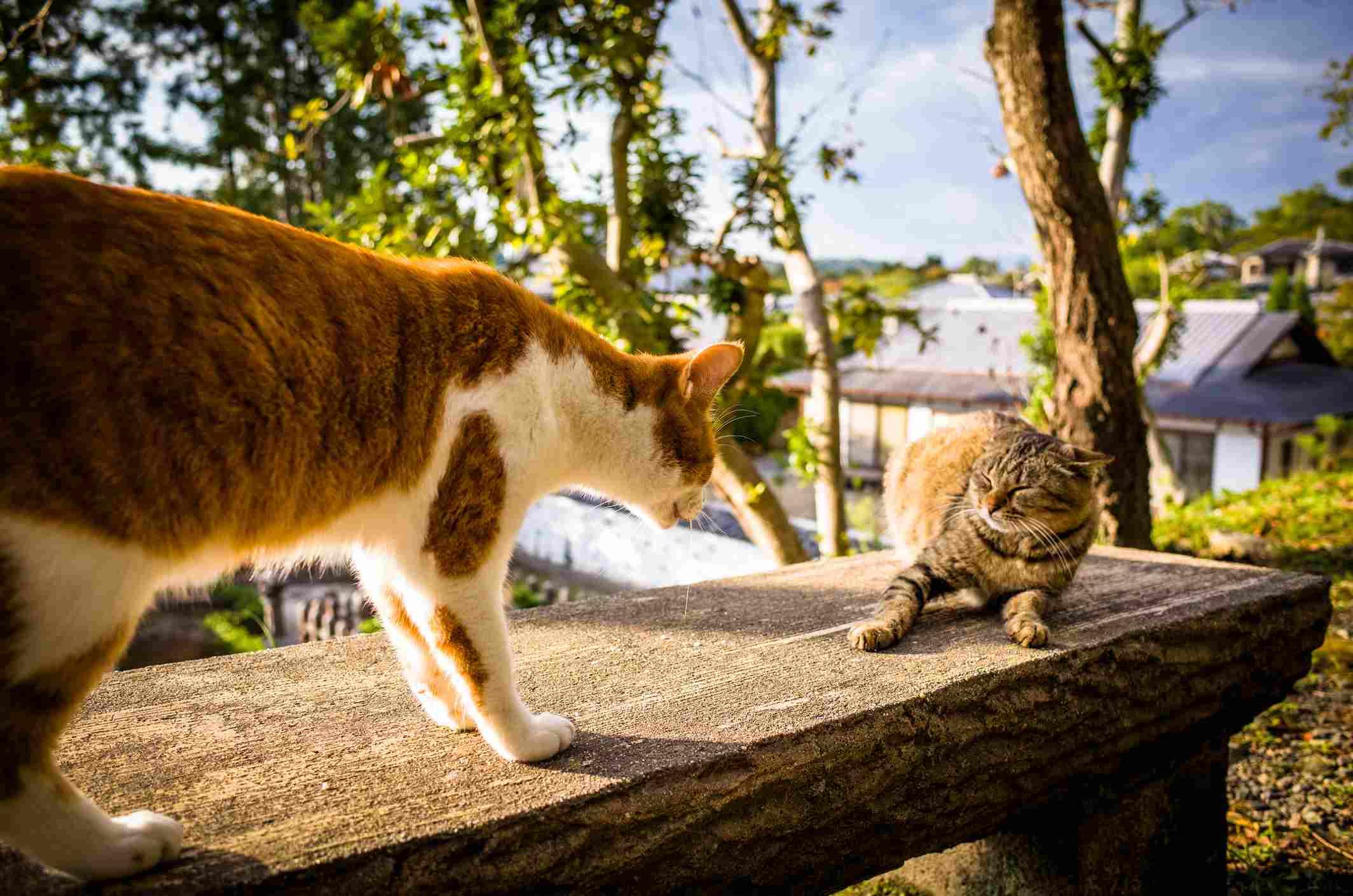 A cat threatening kitten