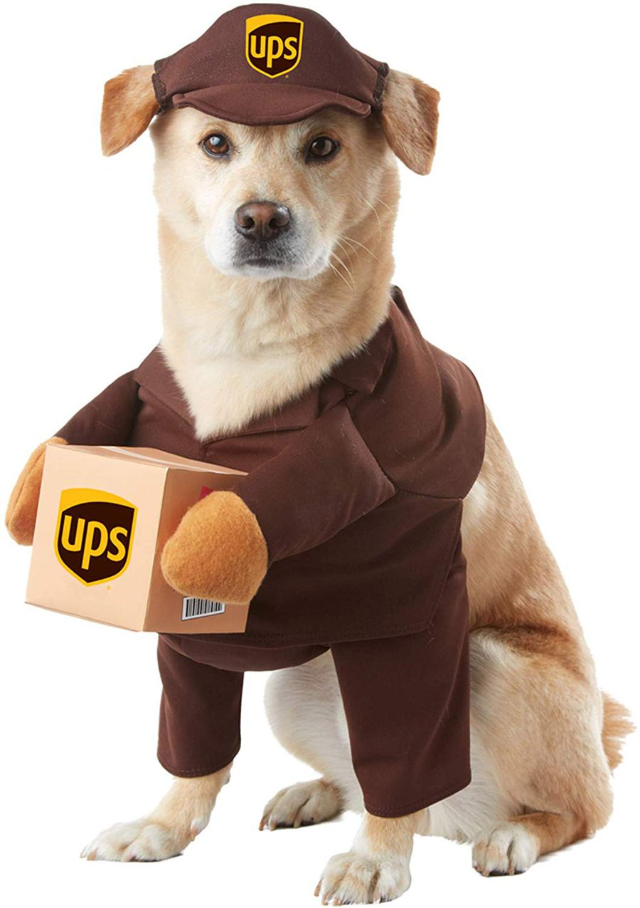 The 8 Best Halloween Costumes For Dogs