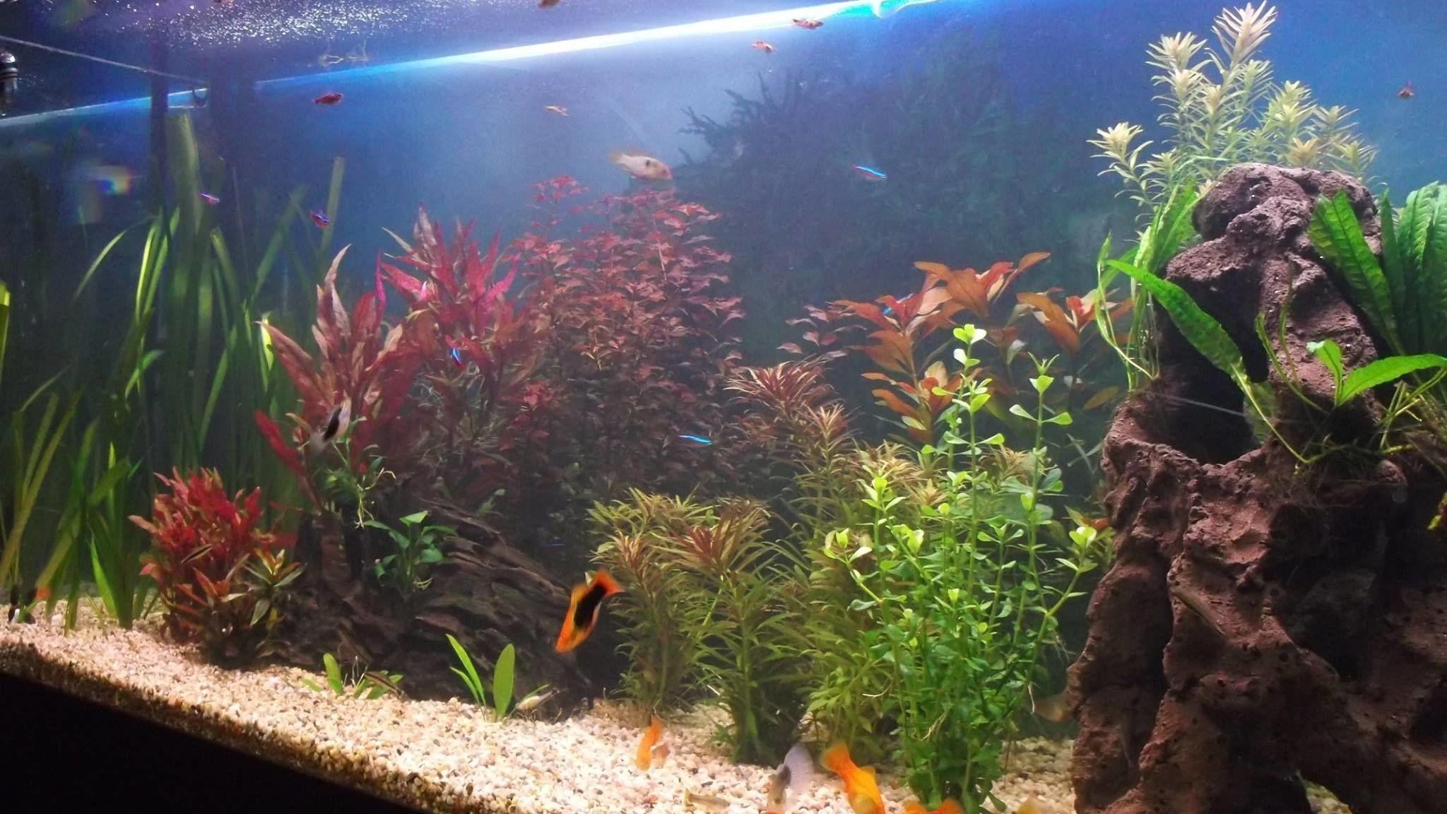 Fixing Bacterial Bloom In Your Aquarium