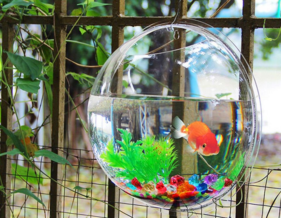 Fish bowl wall mount