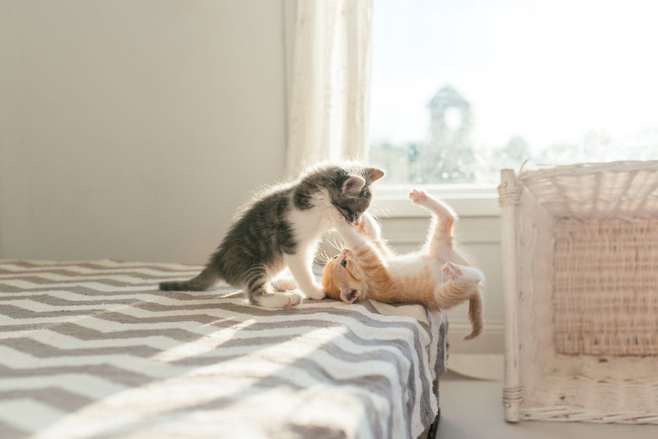 Kittens playing and socializing