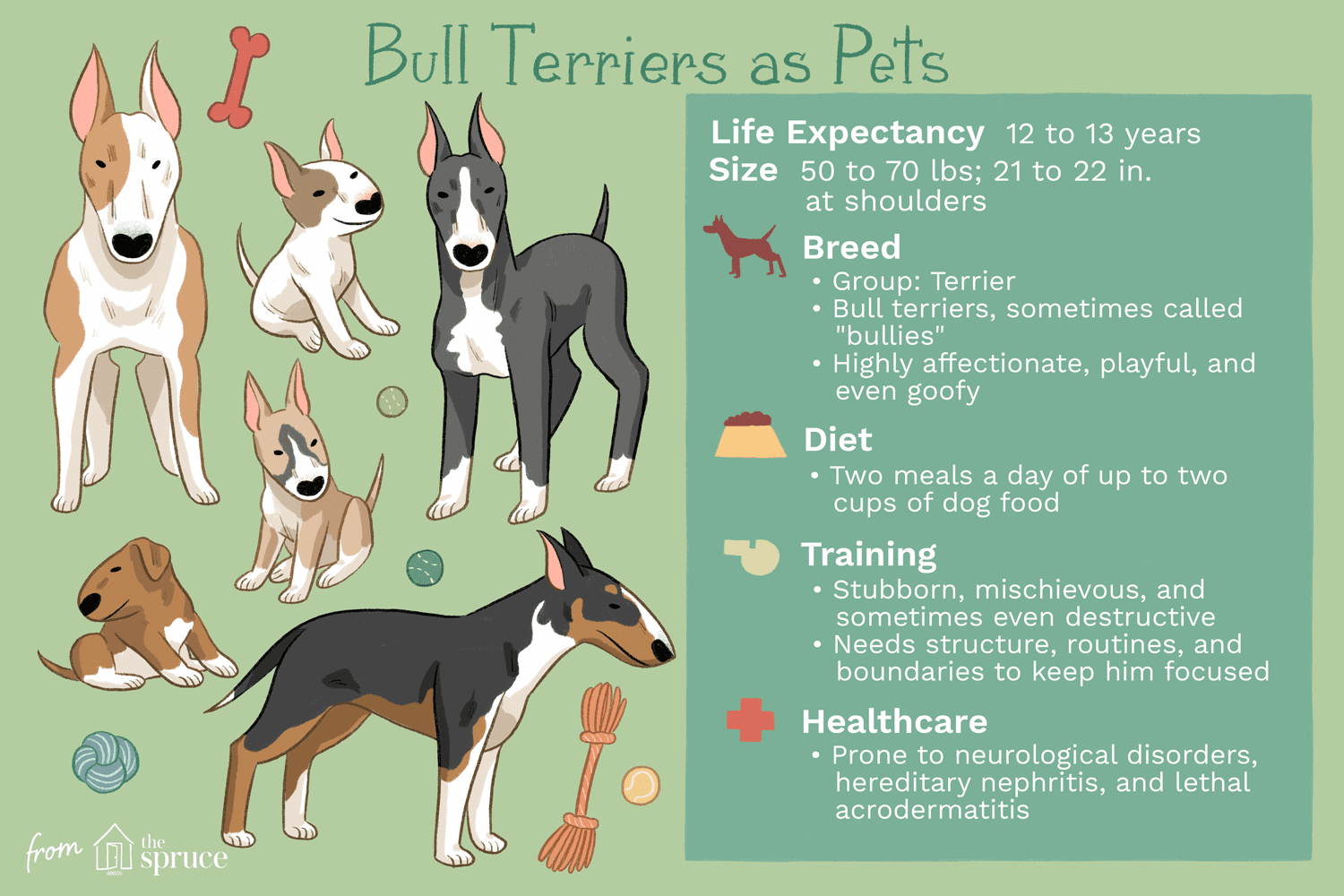 bull terriers as pets illustration