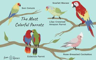 Guide To Pet Bird Species