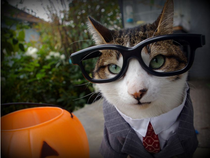 cat with glasses and suit