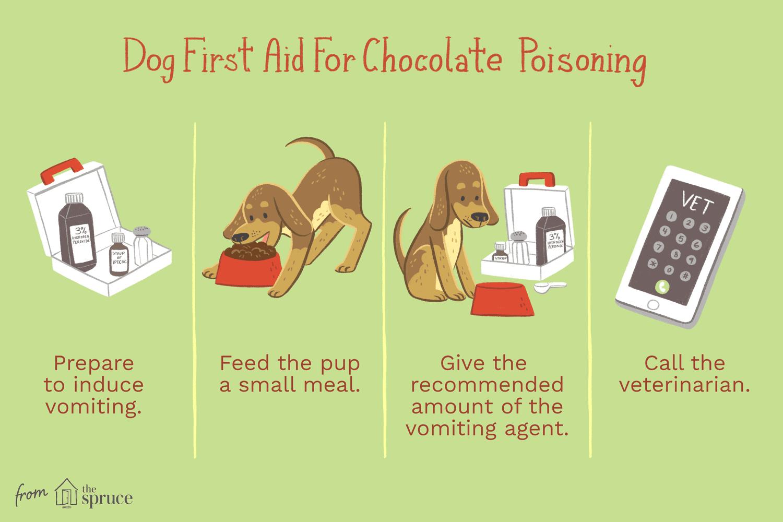 Una ilustración de primeros auxilios para un perro que ha comido chocolate