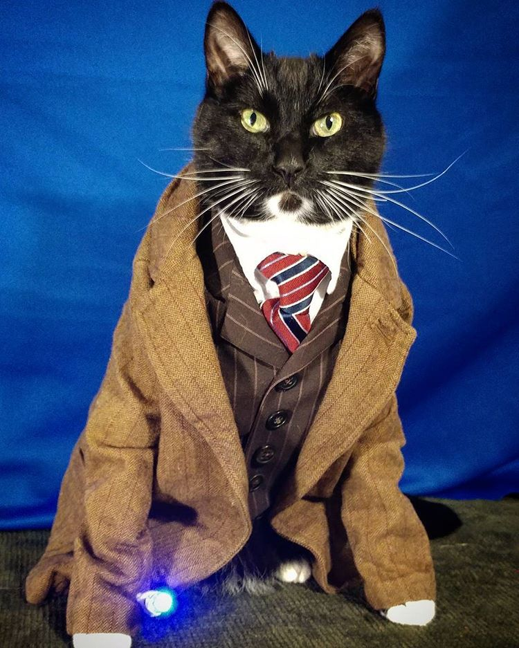 cat in Dr. Who costume