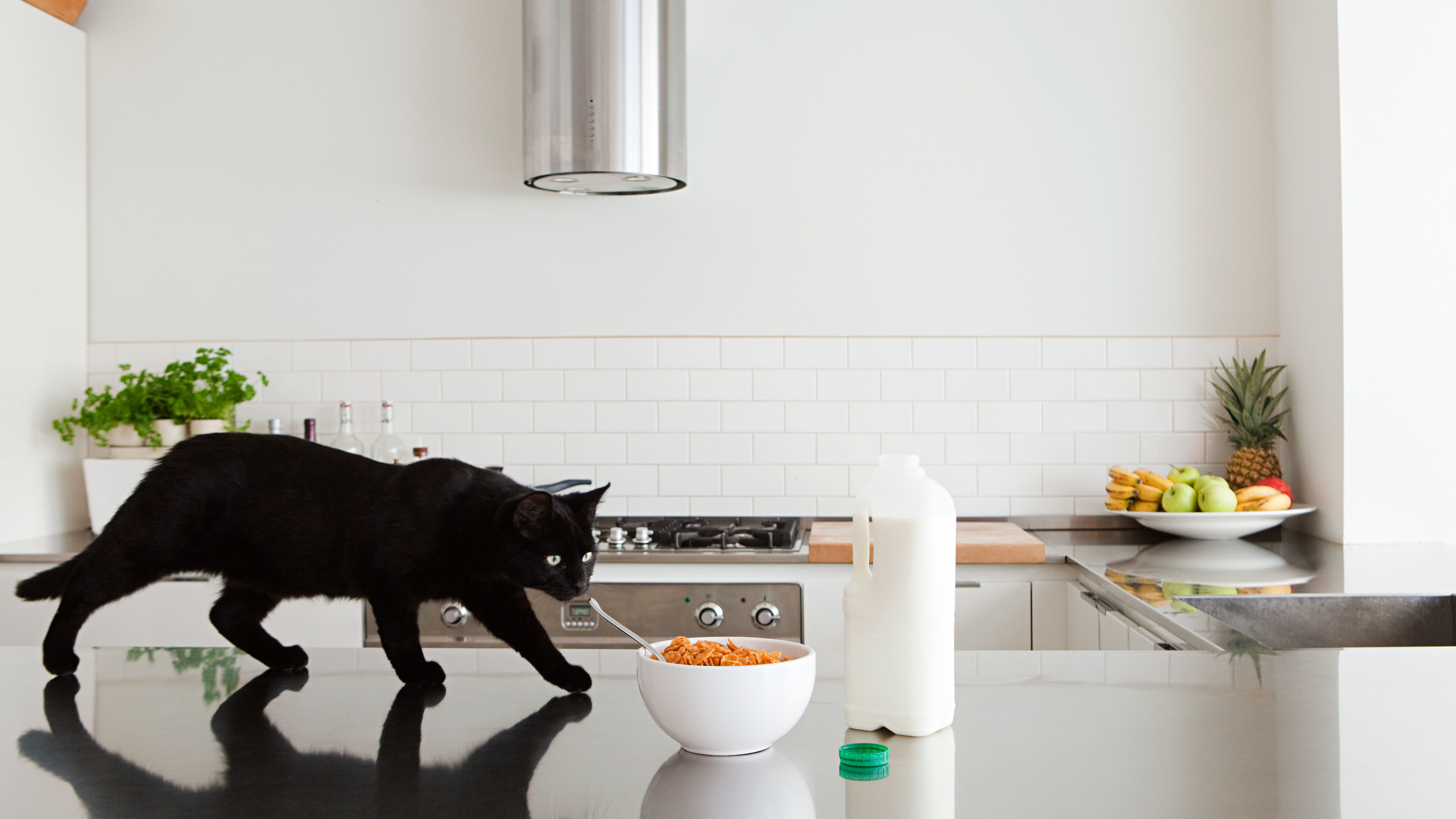 Reasons Why Your Cat Jumps On The Kitchen Counters And How To Stop It