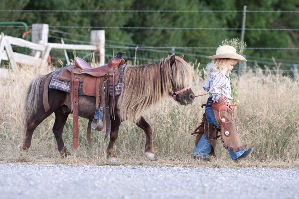 Small child in cowboy outfit with cute hairy pony on a lead