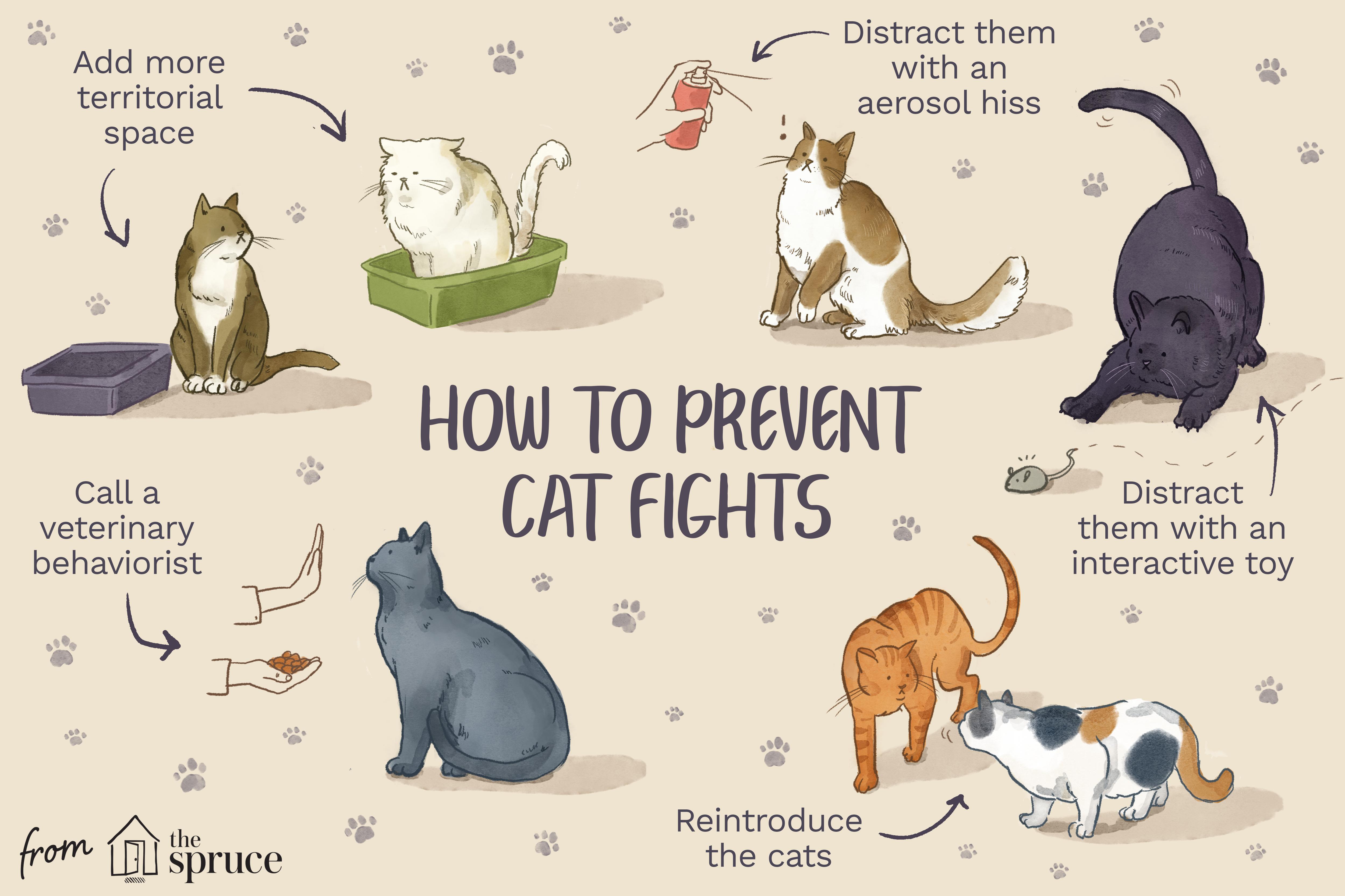 cómo prevenir la ilustración de peleas de gatos