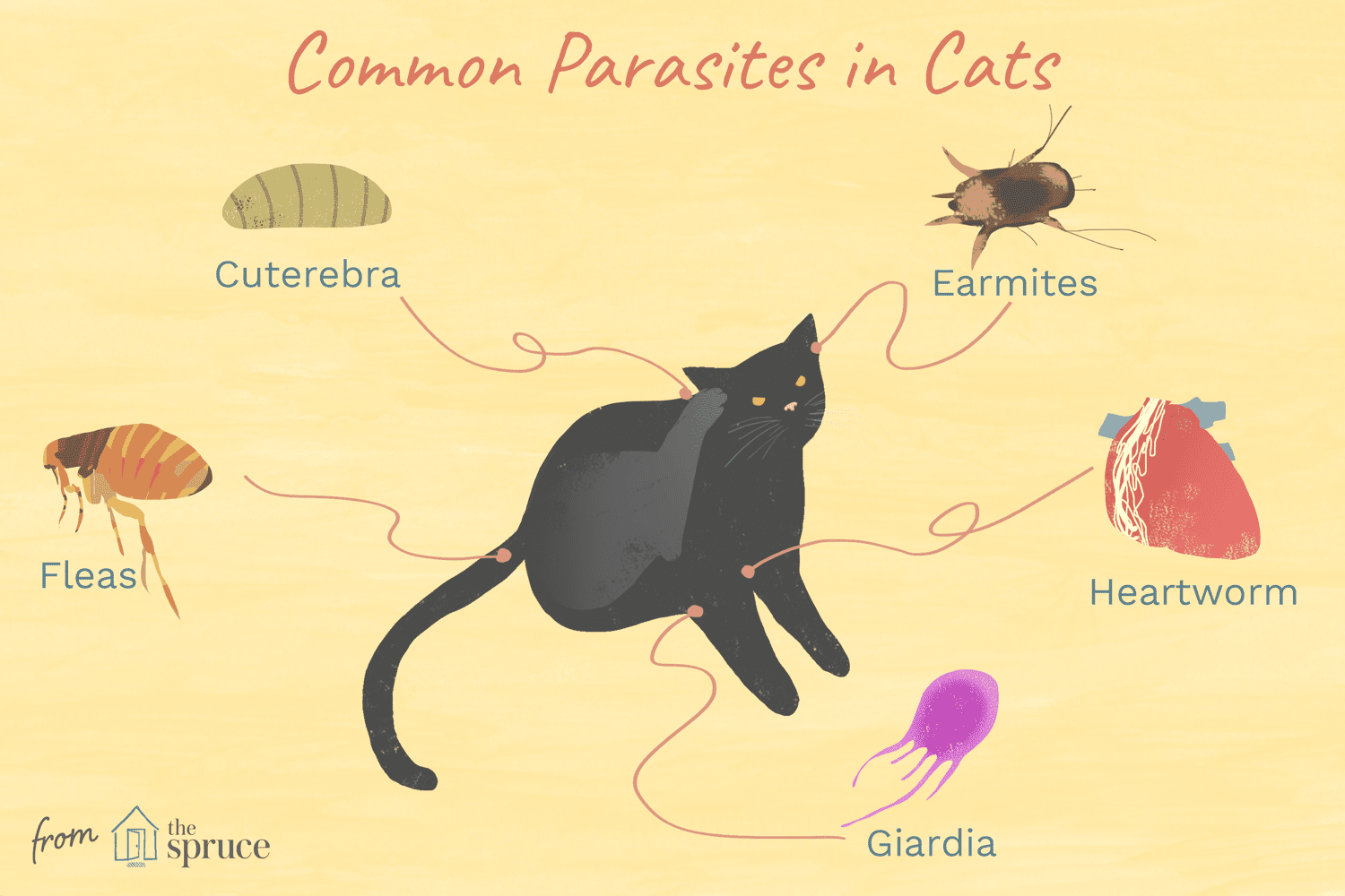 Worms Mites Ticks And Other Bugs That Live On Cats