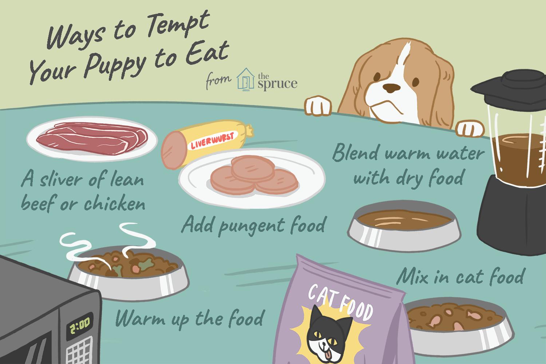 maneras de hacer que tu cachorro coma