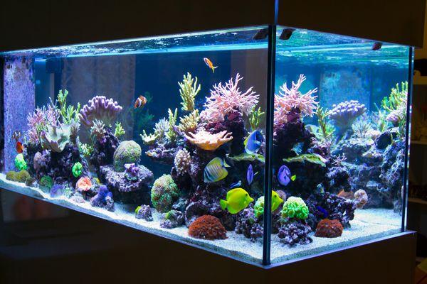 Reef aquarium in the dark