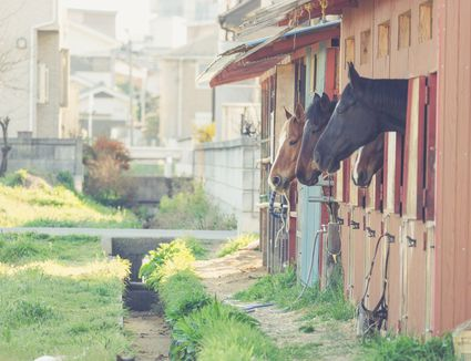 Horse Stable Design for Safety and Comfort on
