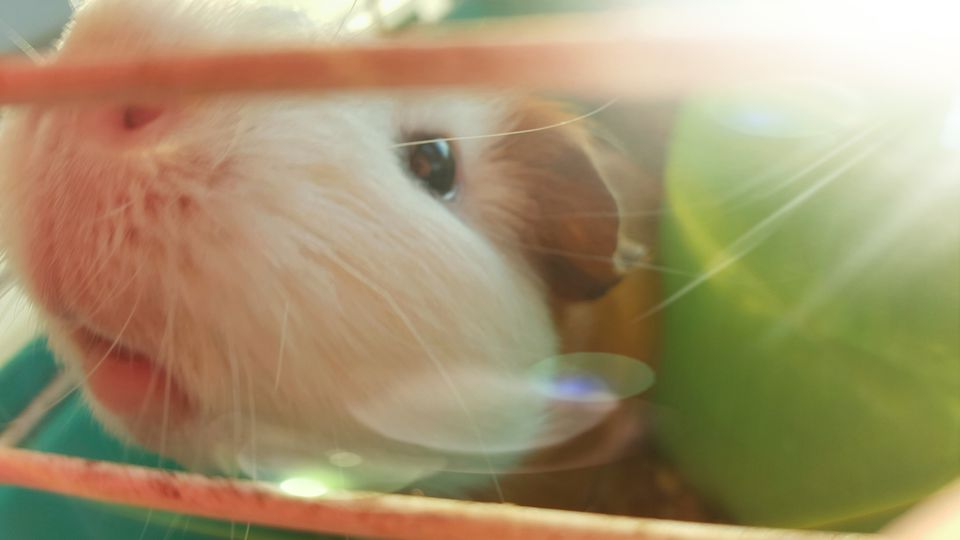 Close-Up of a hamster