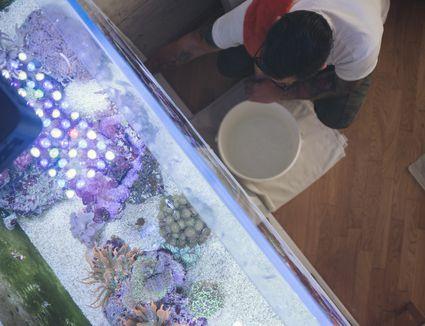 Man inspecting fish tank