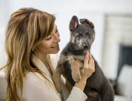 German Shepherd puppy with woman