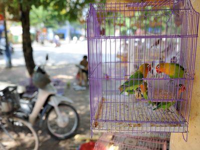 best 25 brd cage decoraton deas on pnterest.htm 5 ways to streamline pet bird care  5 ways to streamline pet bird care