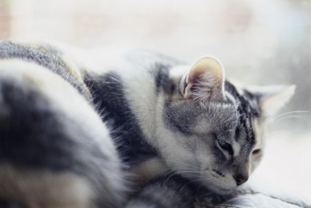 Euthanasia For Your Cat