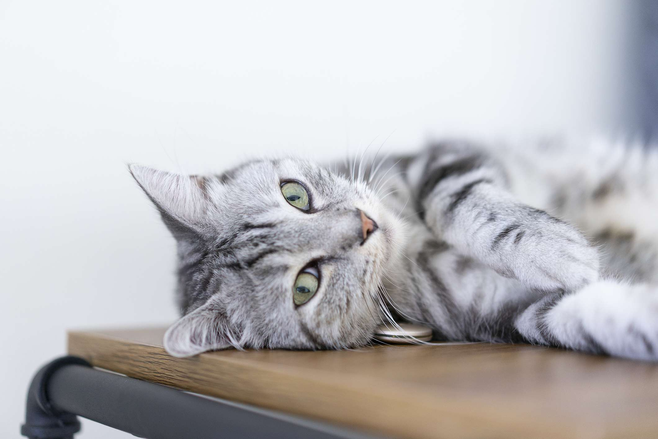 A grey, striped cat with green eyes