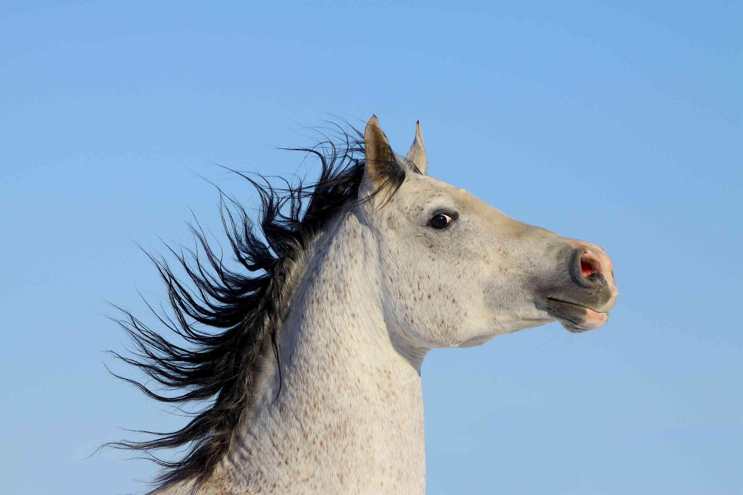 Anything that causes a horse to toss its head or fly back can cause further problems.