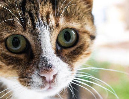 Closeup of a cat's face