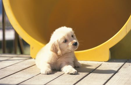 The Best Dogs For Kids And Families