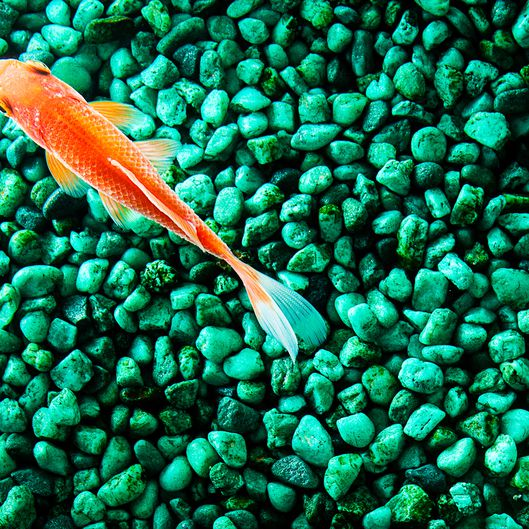 Why Gravel Or Substrate Is Necessary For An Aquarium,Rotisserie Oven